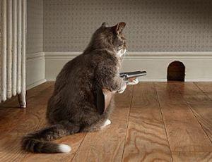shotgun_cat